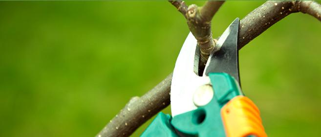 A manutenção das plantas