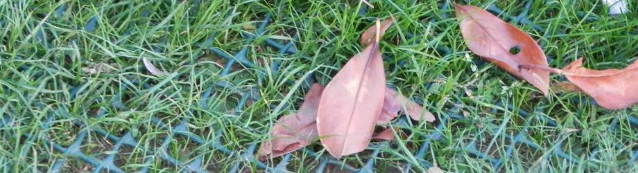 grasscarpet